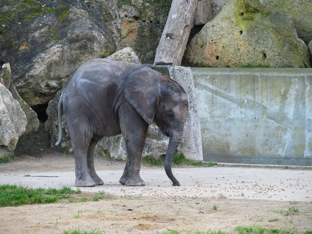 schönbrunn zoo wien